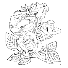 Four Roses in One Stem Coloring Pages