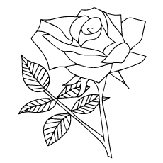 Nature Rose Flower to Color Sheet