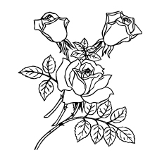 Three Roses With Leaves Coloring Picture
