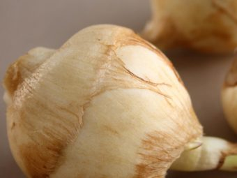 Arrowroot For Babies: Benefits And Ways To Include In Diet