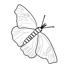 American-Snout-Butterfly-17