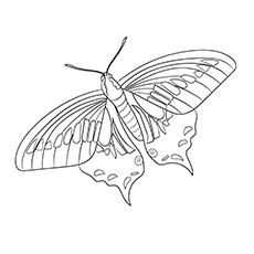 Anise-Swallowtail-17
