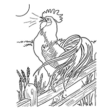 Dawn-Rooster