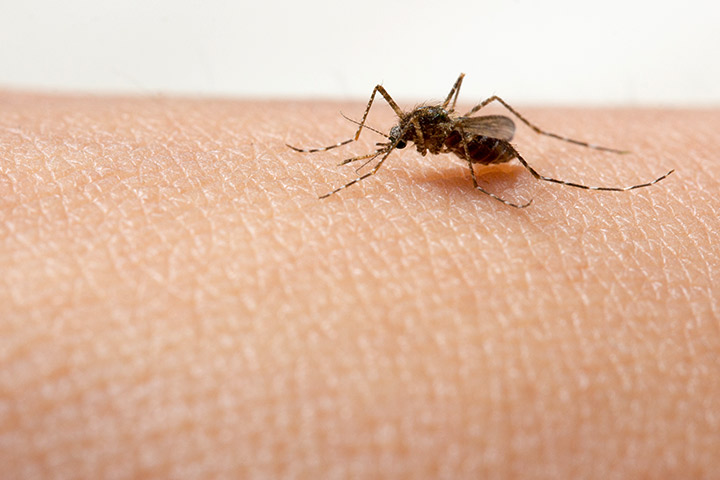 Dengue Symptoms In Babies Causes Diagnosis And Prevention