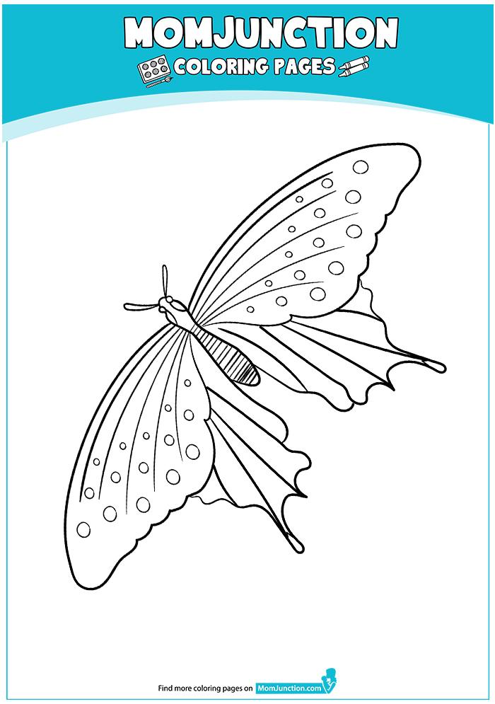 Giant-Swallowtail-17