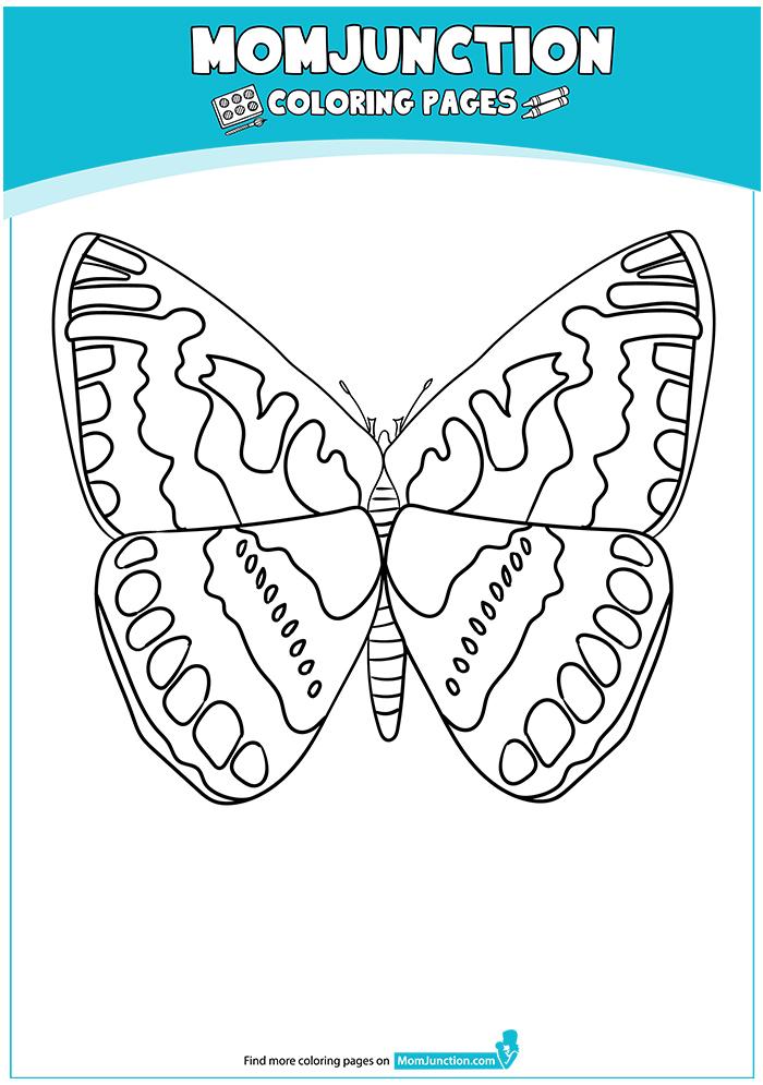 Hesperiidae-Butterfly-17