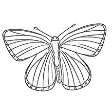 Lycaenidae-Butterflies-17