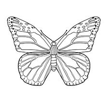 Monarch-Butterfly-17