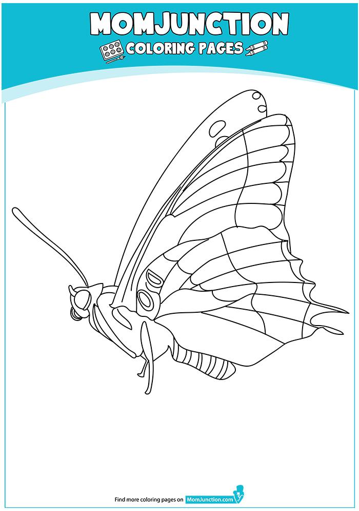 Papilionoidea-Butterfly-17
