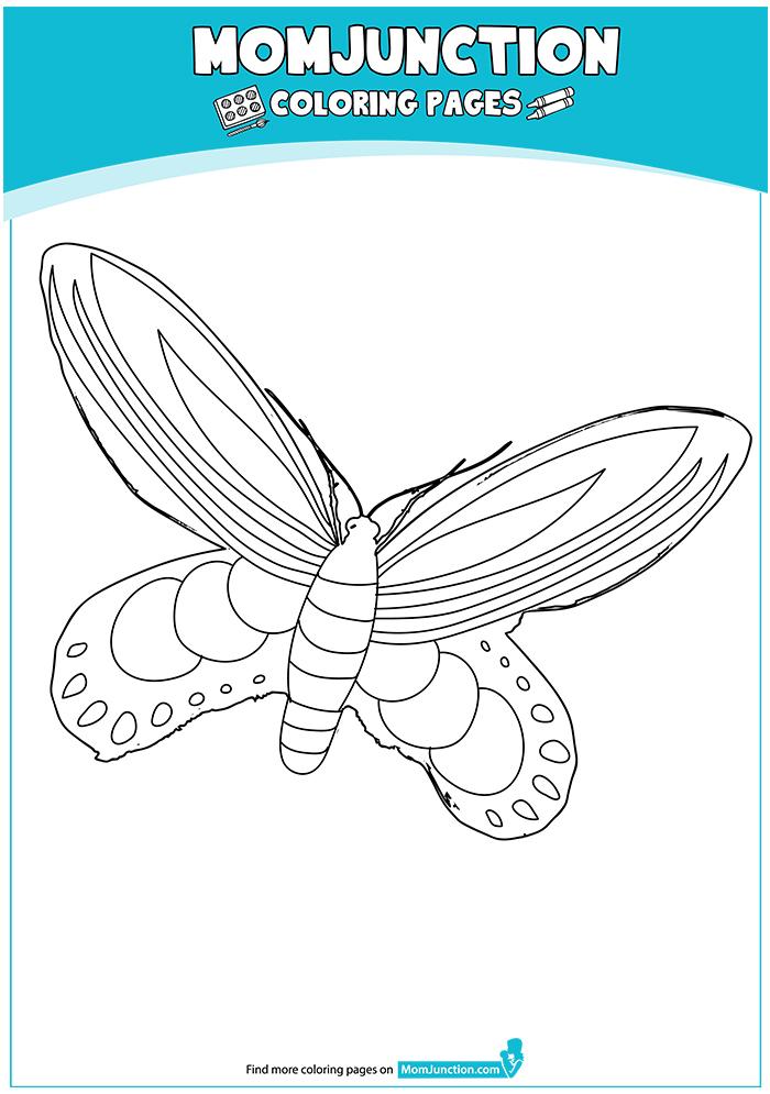 Queen-Alexandras-Birdwing-Butterfly-17