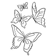 The-Butterflies