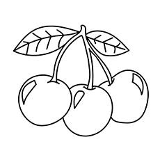 The Cherries 17