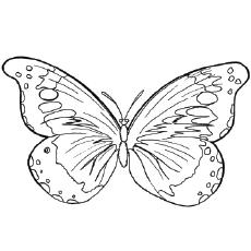 The-Goliath-Birdwing-Butterfly