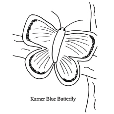 The-Karner-Blue-Butterfly