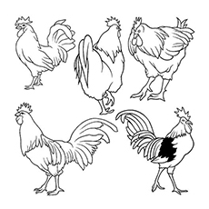 The-Many-Roosters