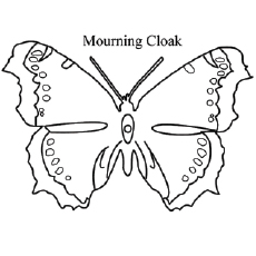 The-Mourning-Cloak-Butterfly