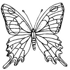 The-Zebra-Swallowtail-Butterfly