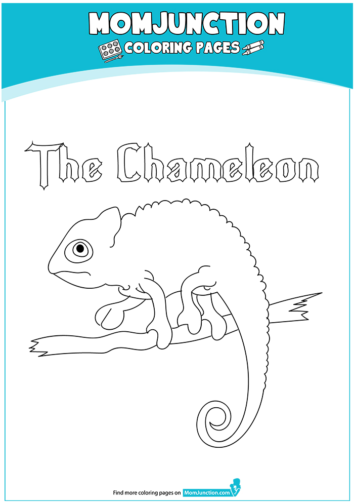 The-chameleon-walking-on-the-tree-16