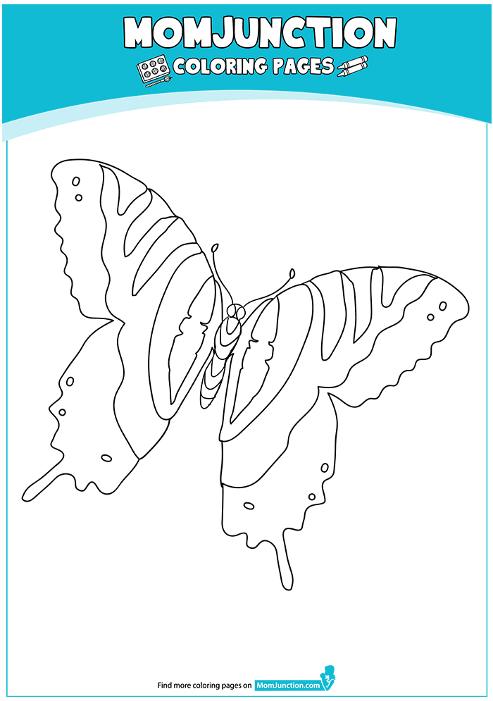 Tiger-Swallowtail-Butterfly-Life-Cycle-17