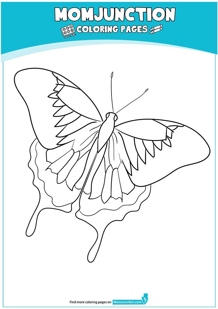 Ulysses-Butterfly-17