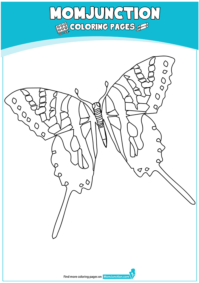Zebra-Swallowtail-17