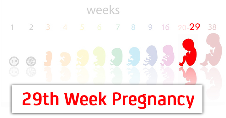 29th Week Pregnancy Symptoms Baby Development And Bodily Changes