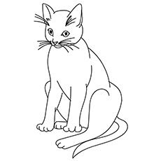 The-Big-Cat-16