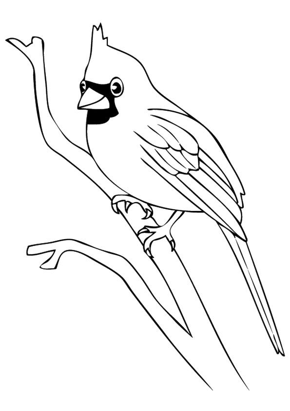 The-Cardinal