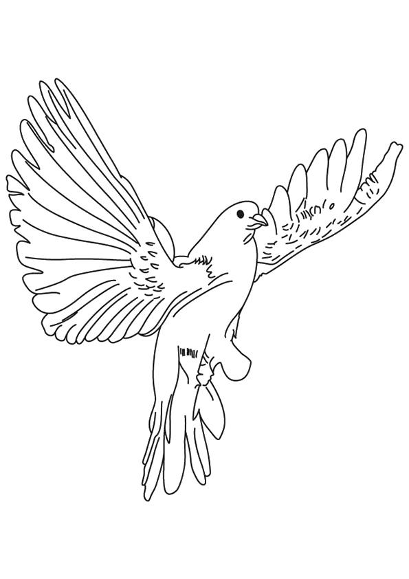 The-Dove