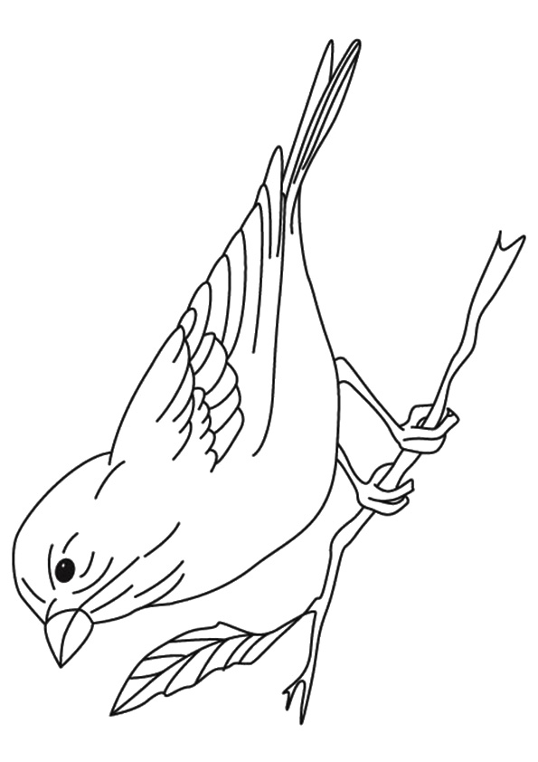 The-Finch