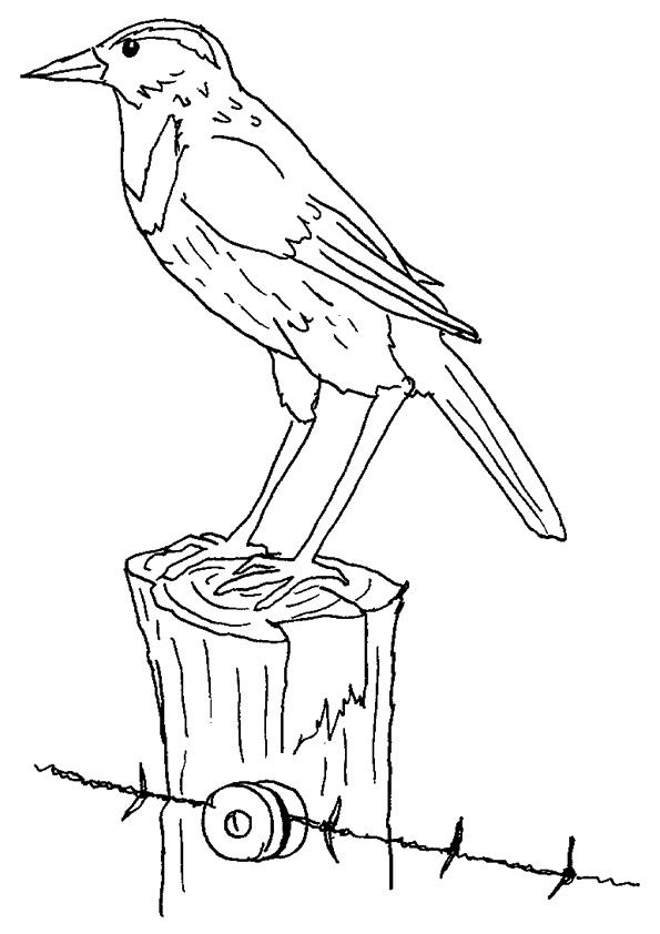 The-Meadowlark