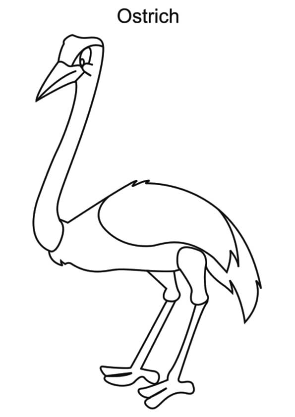 The-Ostrich