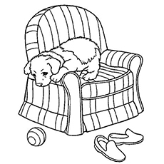 The-Pup-On-A-Sofa