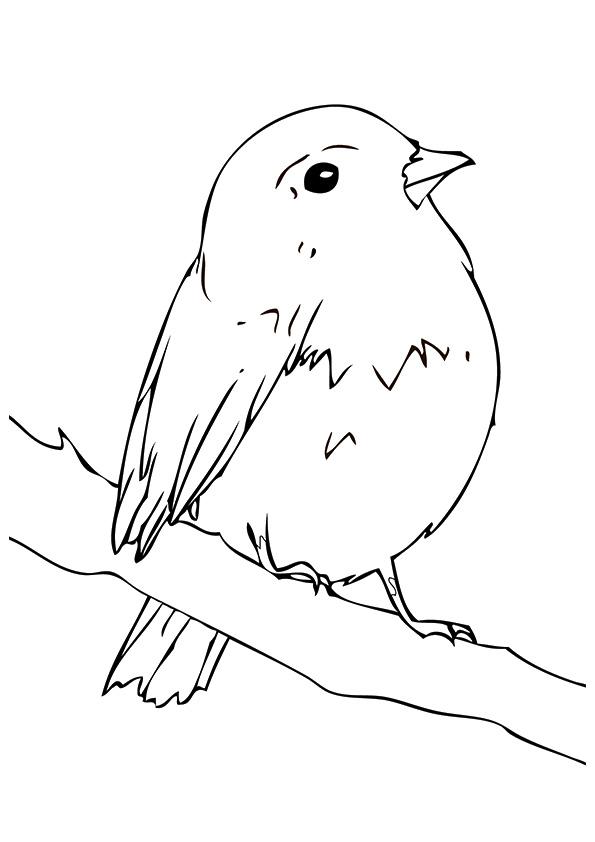 The-Robin