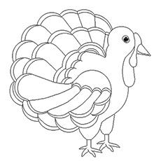 The-Turkey