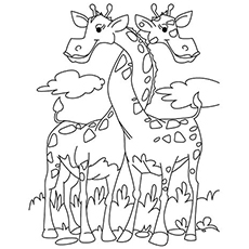 The-Two-Giraffes-Entwined