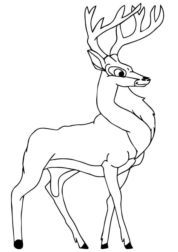 Black-Buck