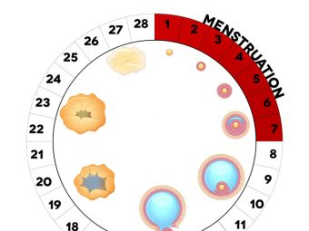 Can You Ovulate More Than Once Per Month Or Cycle?
