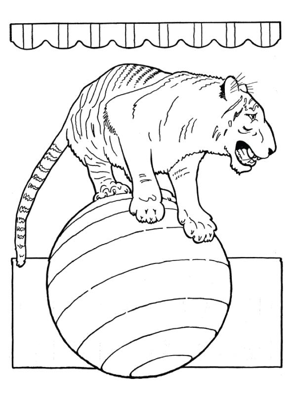 Circus-Tiger
