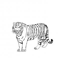 Malayan-Tiger-17