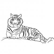 Sumatran-Tiger-17