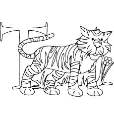 T-For-Tiger