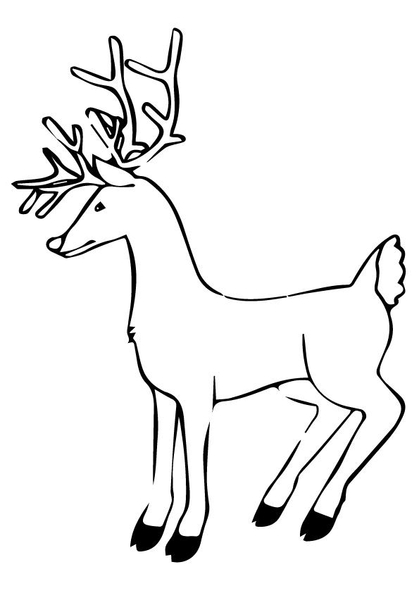 The-Deer-eyes