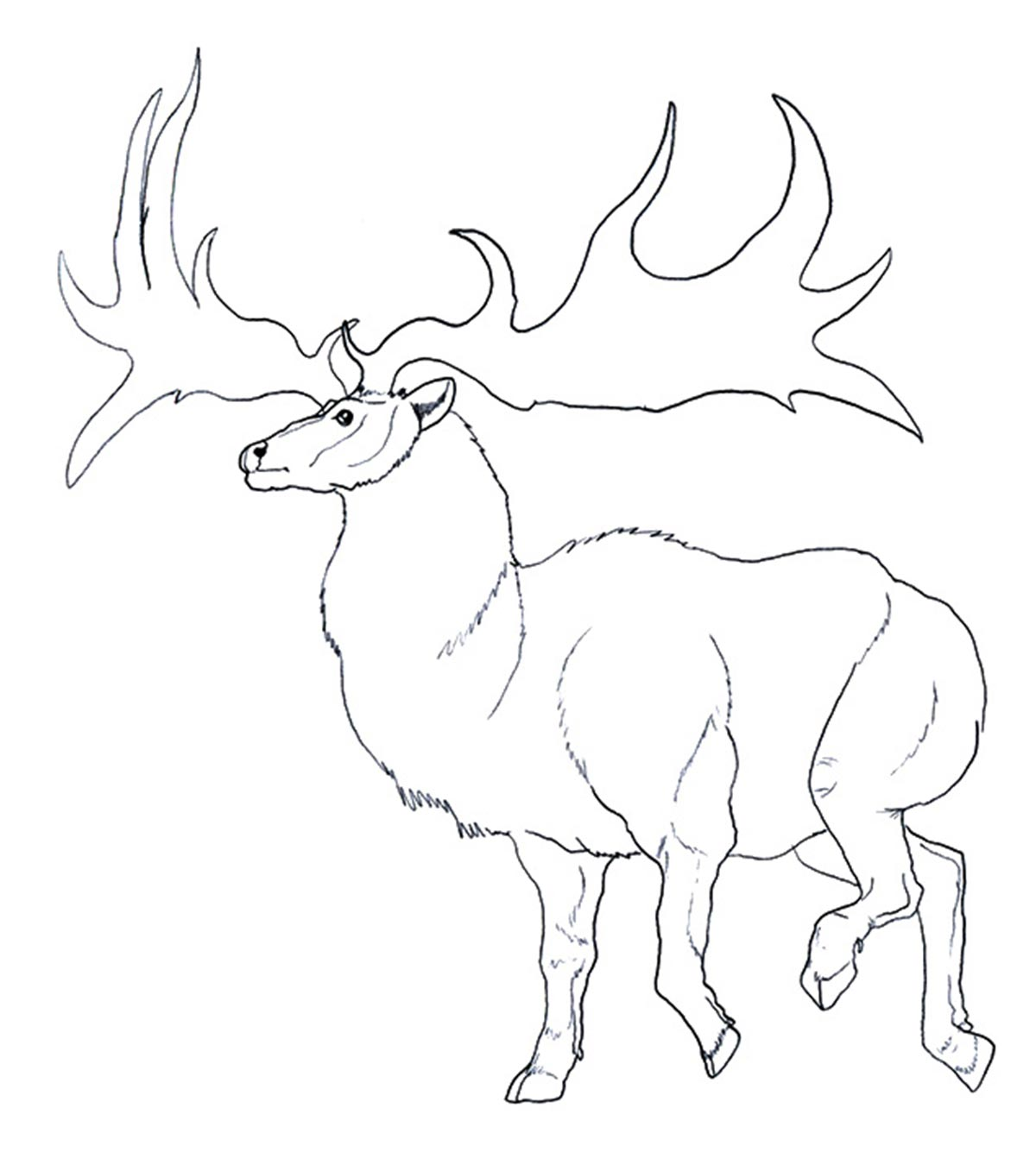- Top 20 Free Printable Reindeer Coloring Pages Online