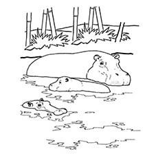 Hippo-Swimming