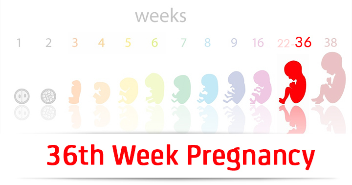 36th Week Pregnancy: Symptoms, Baby Development And Bodily