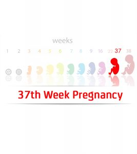 37th-Week-Pregnancy