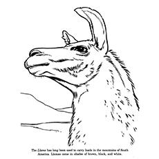A Pensive Llama