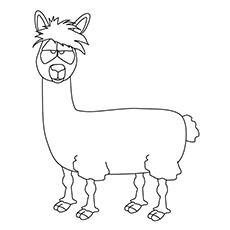 Animated Llama