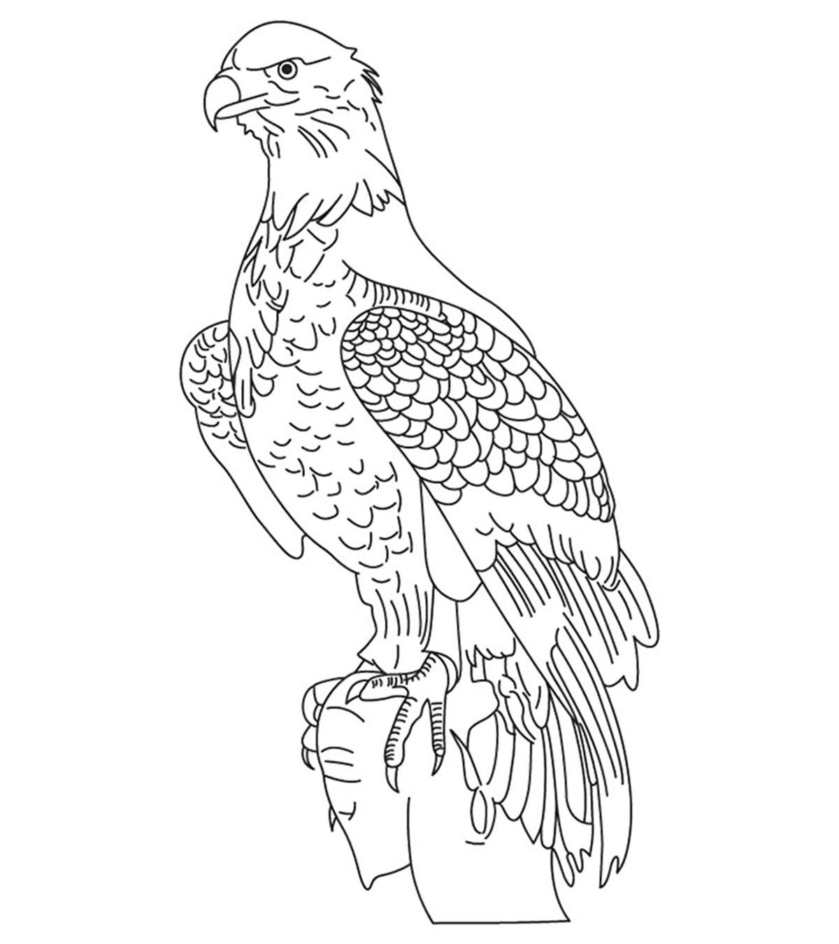 - 20 Cute Eagle Coloring Pages For Your Little Ones